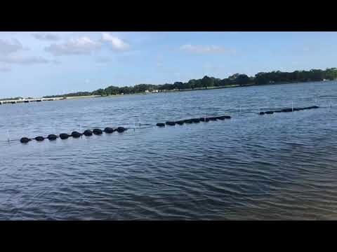 FAILED Oyster Reefs Navy Point Living Shoreline Project Pensacola Fl