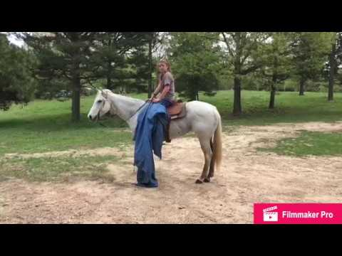 AQHA Grey Dash For Perks Mare For Sale