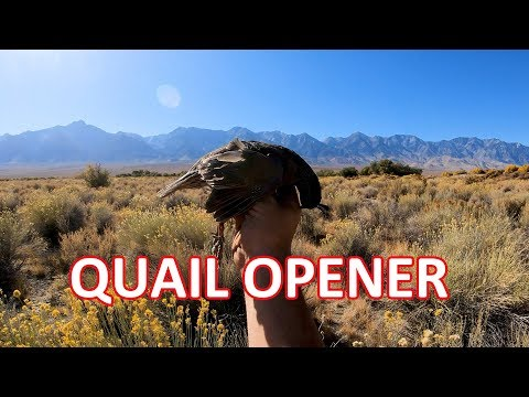 Quail Hunting Opener - Owens Valley 2019