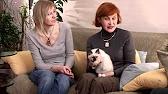 Купить бирманскую кошку. Описание породы, стандарты породы бирманская кошка (священная бирма). Голова бирманской кошки:. Посоветуйте какой-нибудь хороший питомник или частного заводчика, может там, где сами покупали котенка. Москва или мо. Спасибо!. 0 #11 эд 007 08. 04. 2013 12:57.