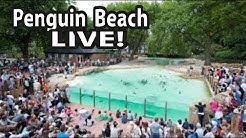 London Zoo - PENGUIN BEACH LIVE 4K