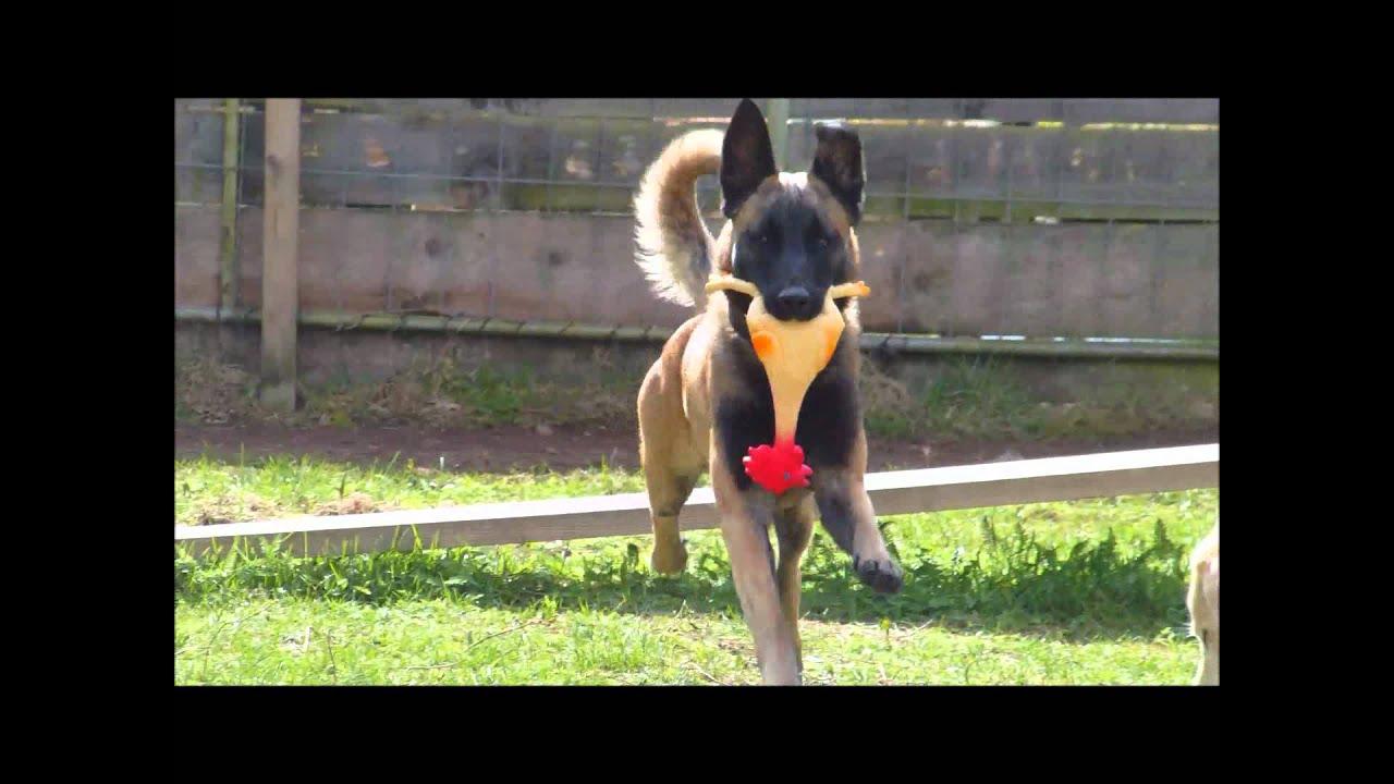 Tierheim Koblenz Hunde Aus Rumänien