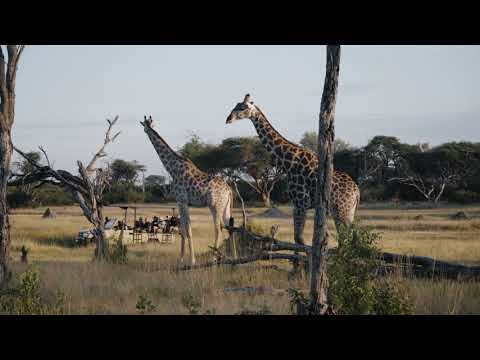 The Hide | Explore Our Camp | Hwange National Park