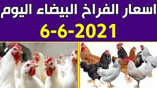 اسعار الفراخ البيضاء اليوم الاحد 6-6-2021 في بورصة الدواجن في مصر