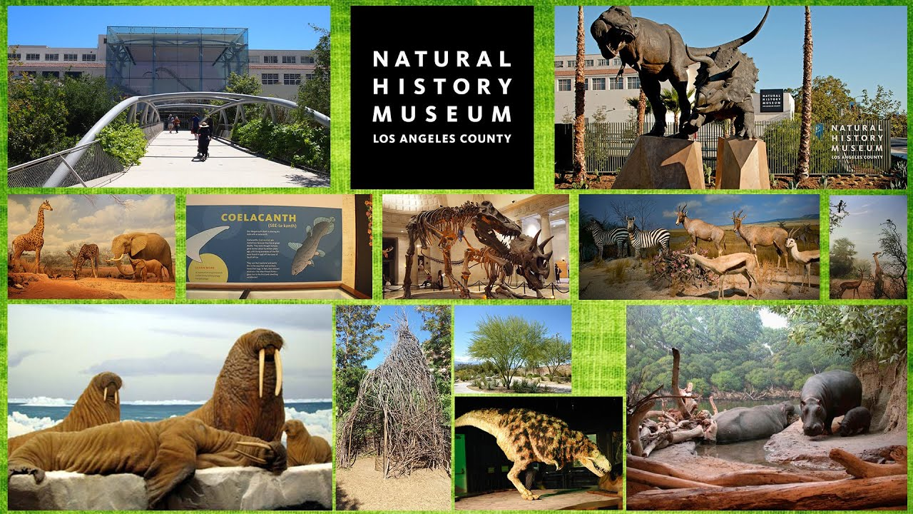 The Natural History Museum is a place you definitely must visit if you're living in or visiting Los Angeles. It is one of the more well known museums in the area and I /5(1K).