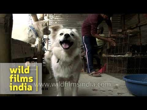 Dogs For Sale At Sonepur Mela Youtube