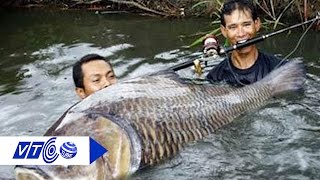 Nguy hiểm khôn lường khi ăn cá nhiễm độc | VTC