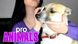 Уход за глазами собаки Pro Animals | Cleaning the dog's eyes