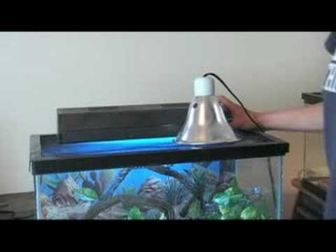 How To Care For Leopard Geckos : Leopard Gecko Cage Lighting Great Ideas