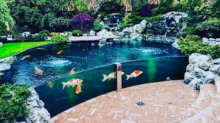 THE MOST BEAUTIFUL BACKYARD FISH PONDS IN THE WORLD