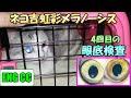 ネコ吉の目の病気、虹彩メラノーシス4回目の眼底検査の結果