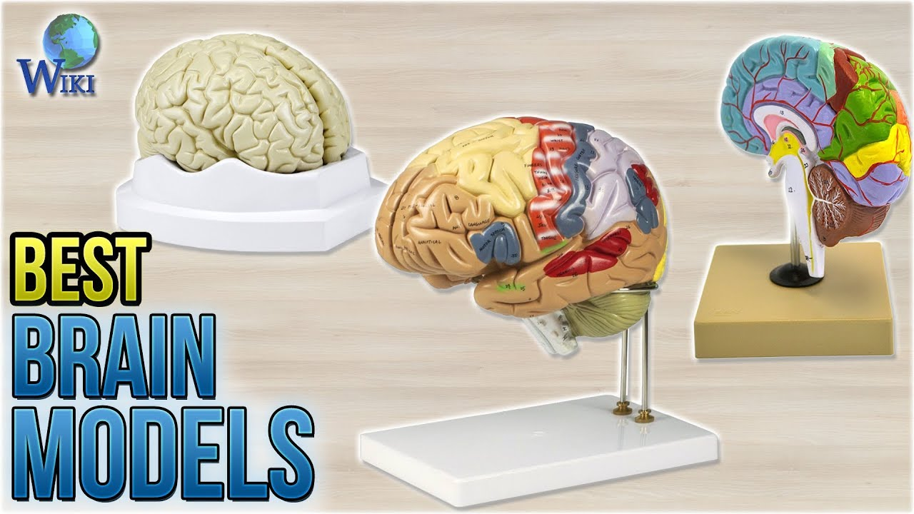 8 Best Brain Models 2018 - YouTube