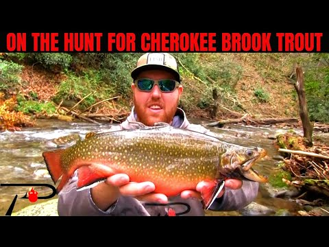Fishing For Brook Trout In Cherokee