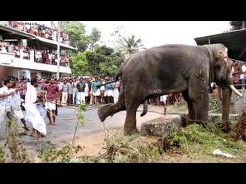 Angry Elephant Attack In Kerala-2 - YouTube  Kerala Elephant Attack Youtube