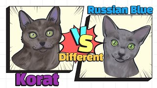 How to identify Russian Blue & Korat (SUB)