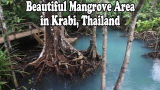 Beautiful National Park & Mangrove Area in Krabi Thailand: Pa Phru Tha Pom Khlong Song Nam