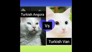 Turkish Angora vs Turkish Van | How Are These Cats Different From Each Other?