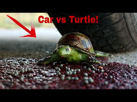 EXPERIMENT: Car Vs Turtle | Car Vs Soft and Crunchy Things