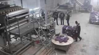 Автоматическая линия для упаковки Картофеля
