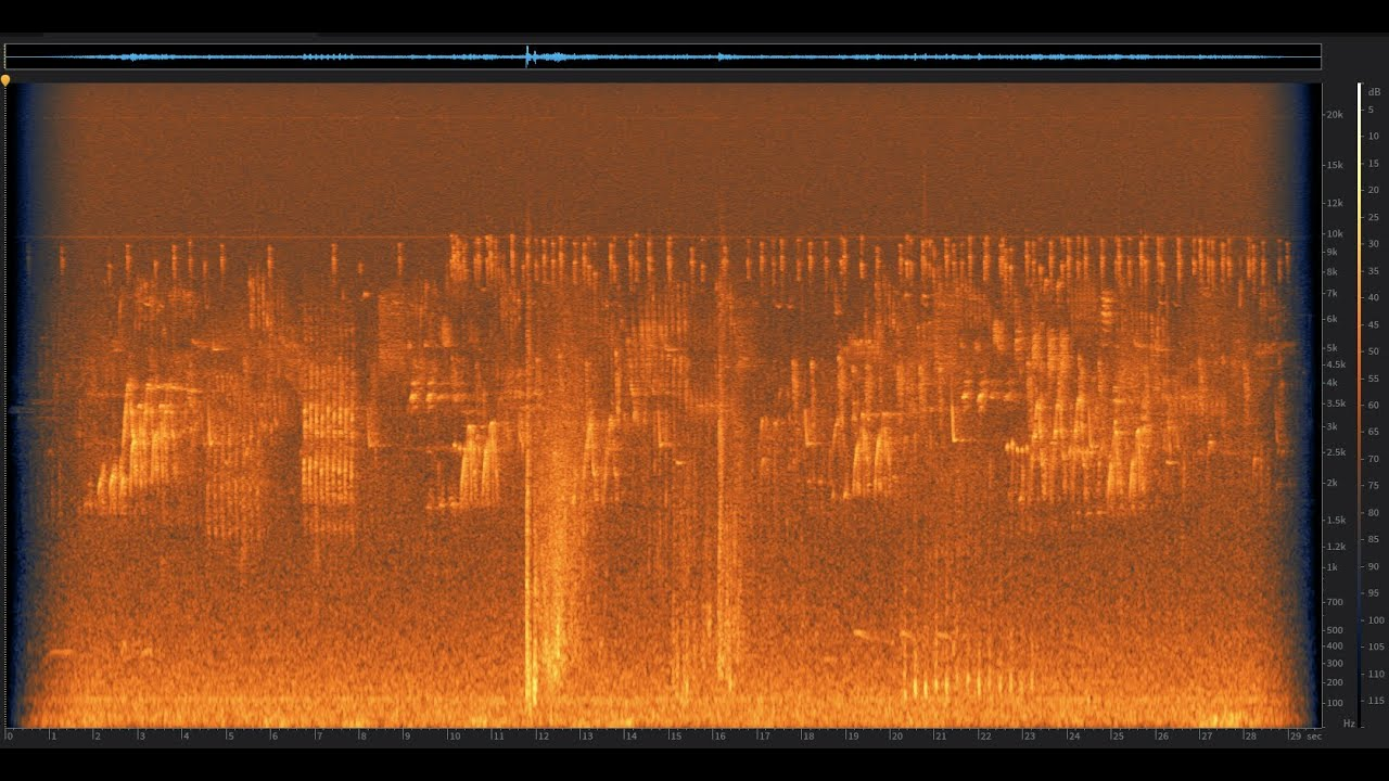 Osprey Dive: Russian River, California | Spectrogram Follow