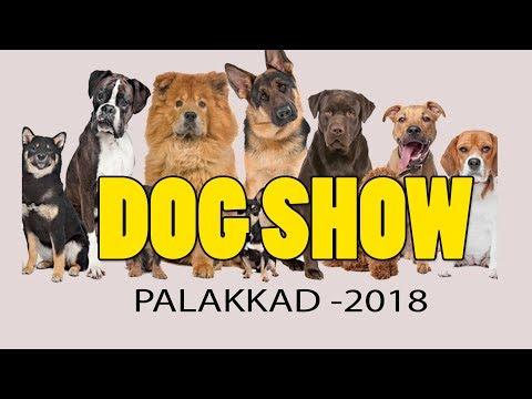Dog Show Palakkad 2018 Dog Farming Kerala Youtube
