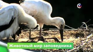 Заповедник Белогорье  | Природа | Телеканал