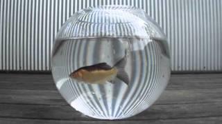 'Fishbowl' (art film)
