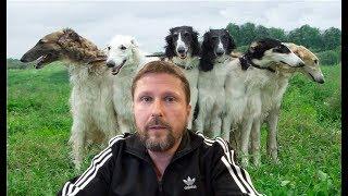 Петины собаки потеряли нюх