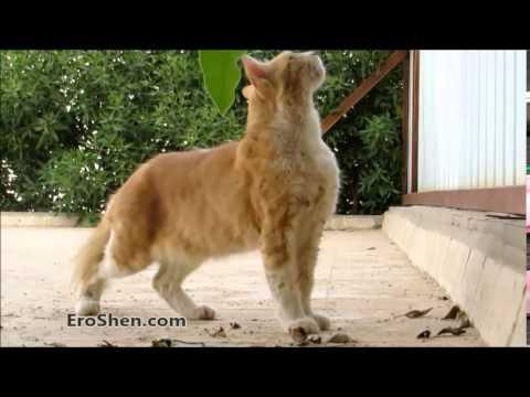 أسرع قفزة قط - cat quick jump