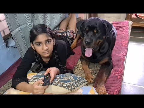 dog almost bitten anshu|guard dog|aggressive dog|Rottweiler dog.