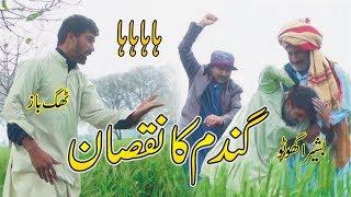 Gandum Ka Nuksan Desi Punjabi Comedy Funny Video Bashira Ghot Thag Baz