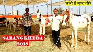 सस्ते मै मस्त बछरे  || Horses for Sale at SARANGKHEDA