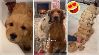 Funny Dogs of TikTok ~ Cutest Puppies Compilation