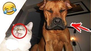 КОШКИ СОБАКИ 2019 ПРИКОЛЫ С КОТАМИ И СОБАКАМИ Смешные Животные Котики и коты 2019 Funny Cats