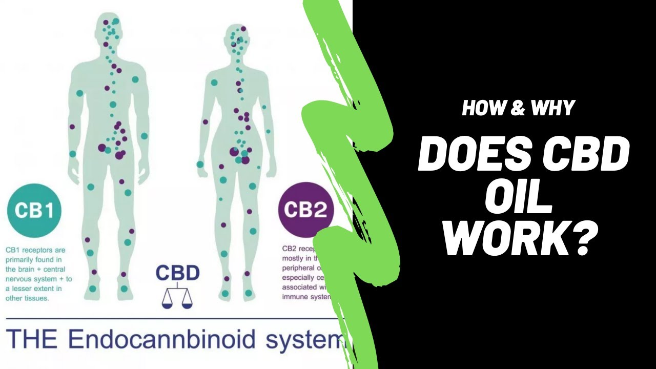 How & Why Does CBD Oil Work?