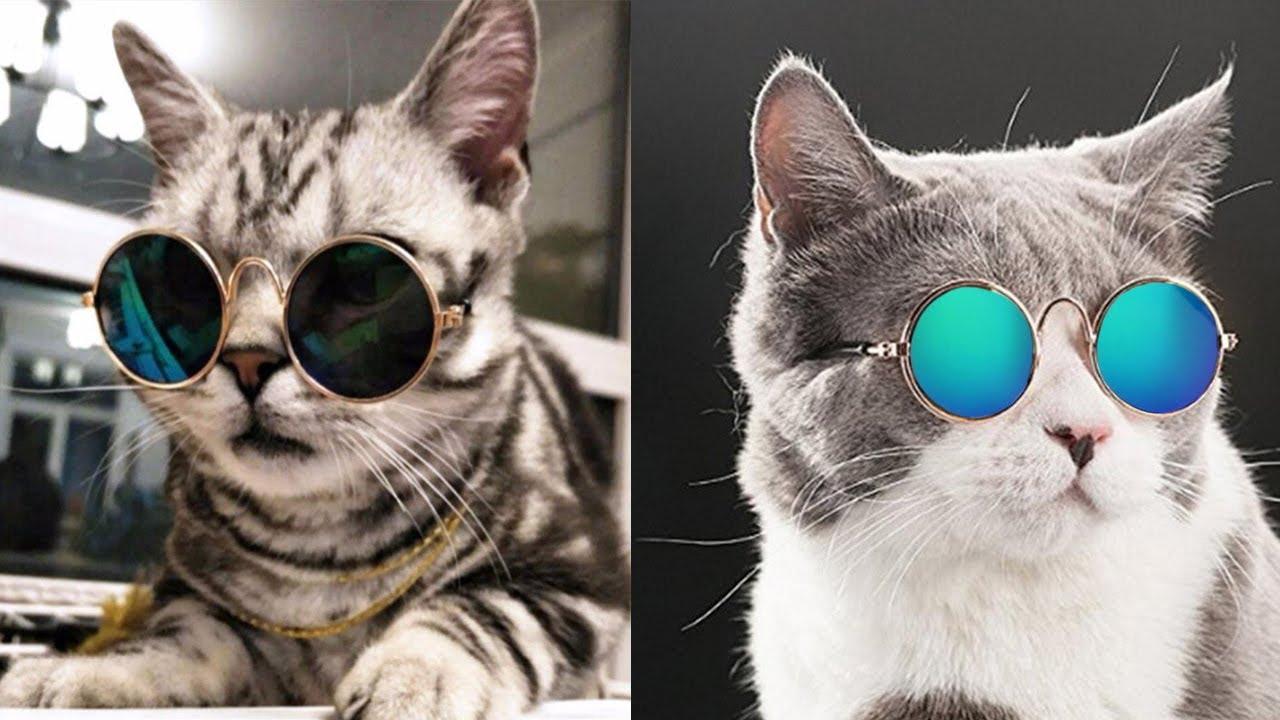 Meong Kucing lucu sedang menyusui ibunya   Funny Videos ...