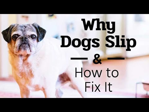 why-dogs-slip-and-how-to-fix-it---the-buzby-dog-podcast