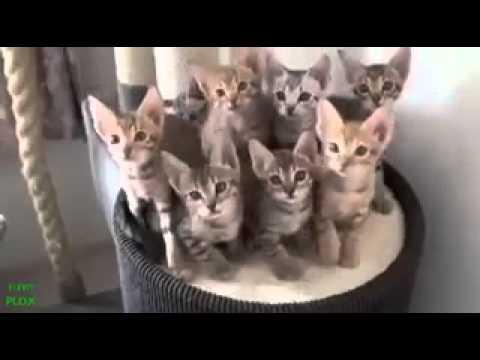 Gatti Pazzi Video Divertenti 1 Youtube