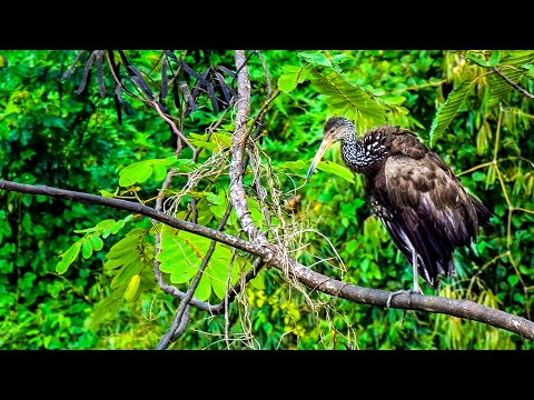 BIRDS IN AMAZON JUNGLE. PERU TOUR.