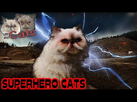 Two Stupid Cats – Episode 10 – SUPERHERO CATS ! EPIC CAT FIGHT !  Funny Fail Cat Video