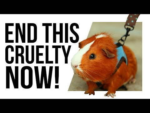 This game is a THREAT to GUINEA PIGS!?