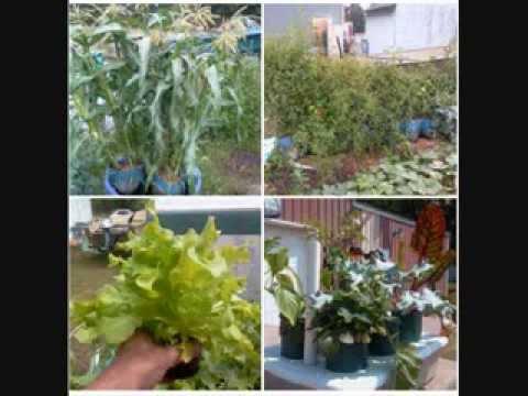 Rain Gutter Grow System, Kiddie Pool System, Pop Bottle Garden! Wow!    YouTube