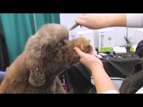 Poodle Doodle Head