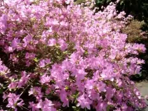 Biltmore Estate Spring Gardens - Pachelbel Canon