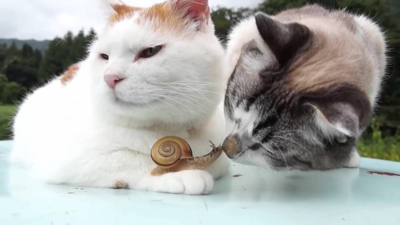 Cat and catx