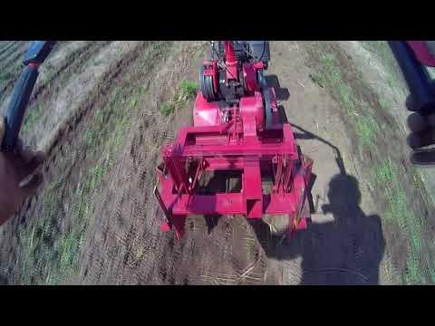 Полоть траву на картофельном поле мотоблоком