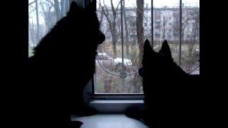 Черная собака № 1 и черная собака № 2