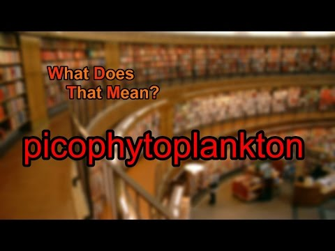What does picophytoplankton mean?
