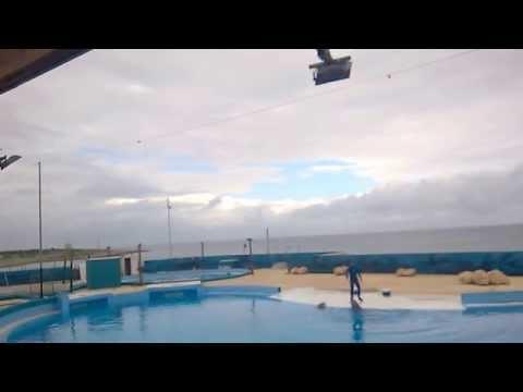 Dolphin show at Mediterraneo marine park Malta