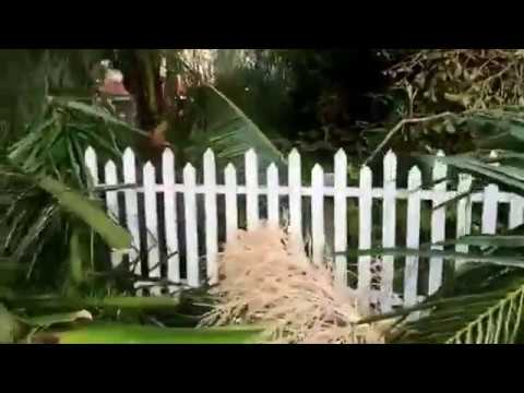 Edison and Ford Estates in Fort Myers, Florida -- Aftermath of Hurricane Irma